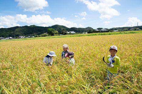 トラスト稲刈り2019の7.jpg