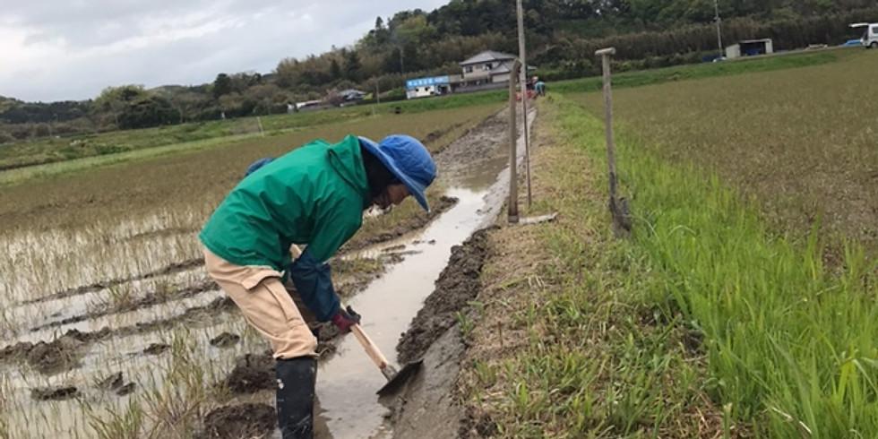 やぎ農園パートナー 4月21日(水)~25日(日)の農作業各3人募集