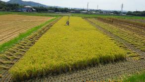 稲作と持続可能性