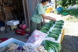 野菜の出荷 地這いきゅうり
