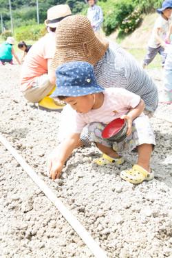 大豆トラスト 種まき