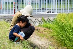 はざ掛け米トラスト 稲の花観察会