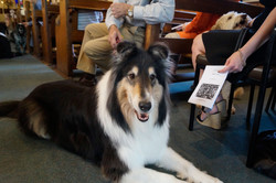 Lassie is very comfortable