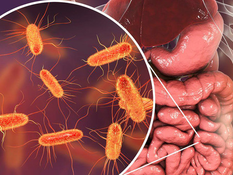 Estudo quebra o paradigma do componente ambiental do microbioma