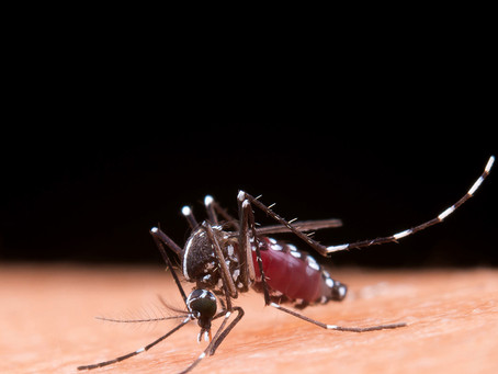 Estudo fornece um caminho para a obtenção de uma vacina de dengue eficaz
