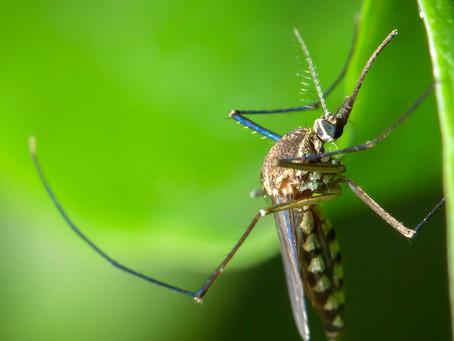 Novo candidato à vacina ativa morte programada do parasita da malária
