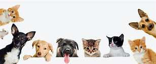 dogs-cats-banner_edited.jpg