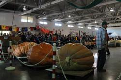 Pumpkinfest 2017