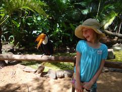 Bird Sanctuary Brazil