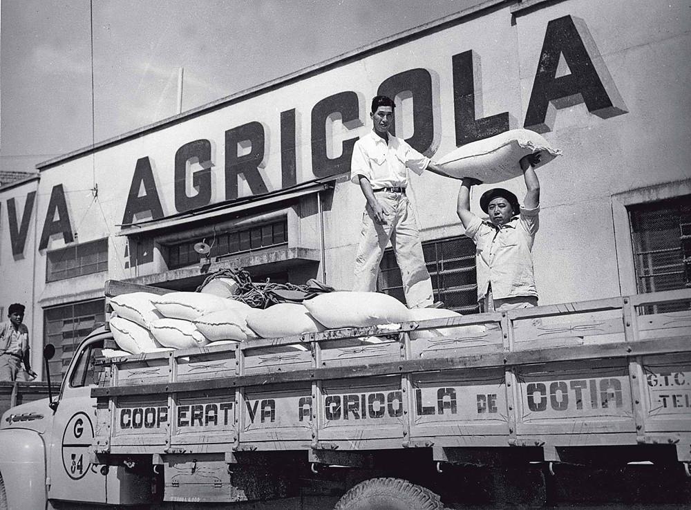 Cooperativa Agrícola de Cotia