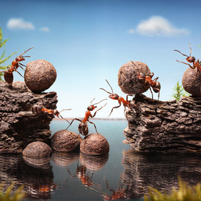 What Ants can Teach us about Business