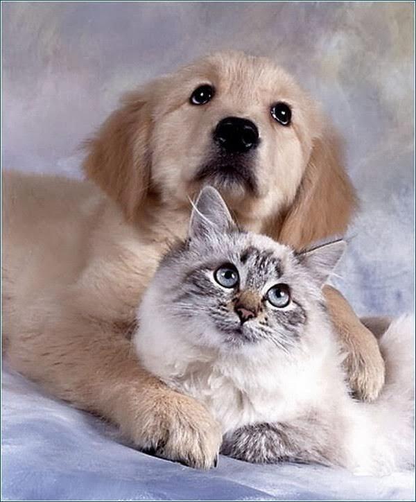 Organização para PETS