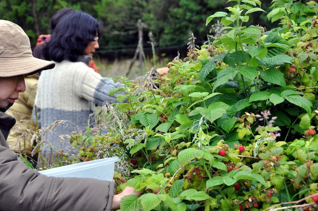 Mari Harvesters