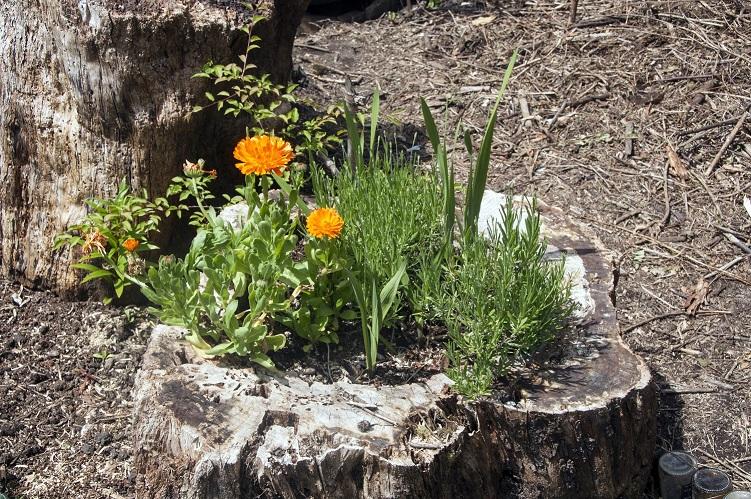 Ecolive Maceta De Flores Y Plantas