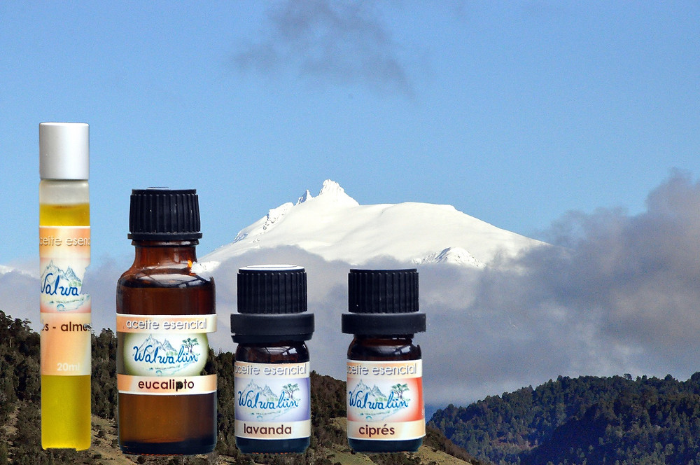Walwalün Essential Oils Patagonia austral garden route Paul Konomi garden workshop taller