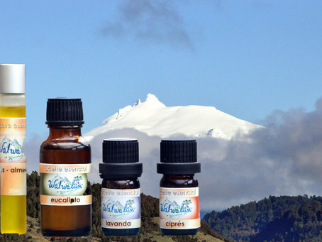Essential Oil Workshop ~ Taller de Aceites Esenciales