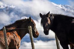 two horses web