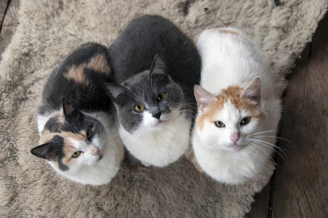 MARI cats