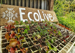 EcoLive 1