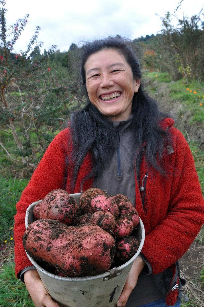 potato harvest 2016