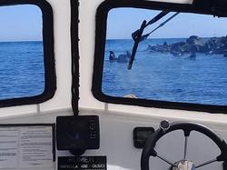 Erics Boat & Sea Lions