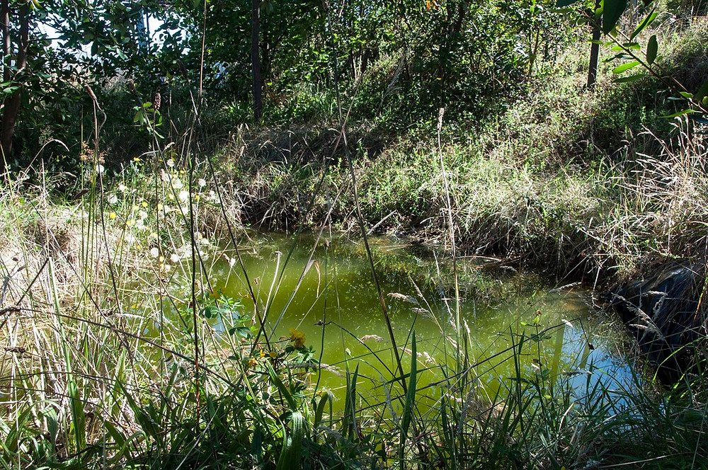 Paul & Konomi's Garden Pond Austral Garden Route