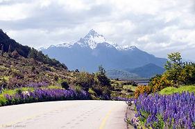 Lago Torres Lupins signed web.jpg