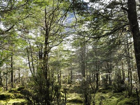 'Bosque Mágico' La Naturaleza Curativa de un Paseo por El Bosque.