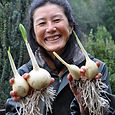 Konomi chilean garlic web.jpg