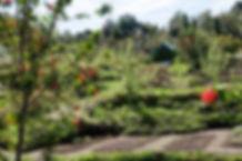 garden below moat house red flower tiny