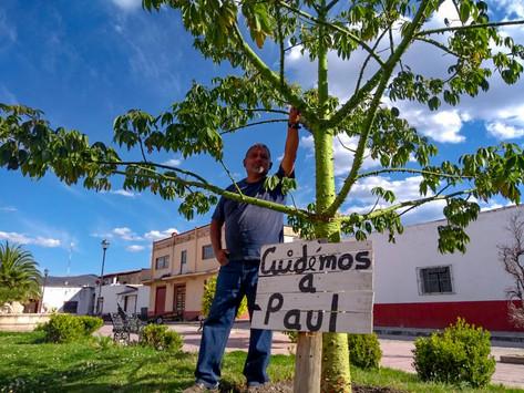 Árbol mexicano que lleva mi nombre llega al cielo!