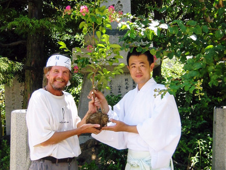 Planting 'Gods Tree' at Shinto Shrine in Hiroshima commemorating the victims of the Atom Bomb