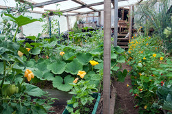 Kitchen Greenhouse