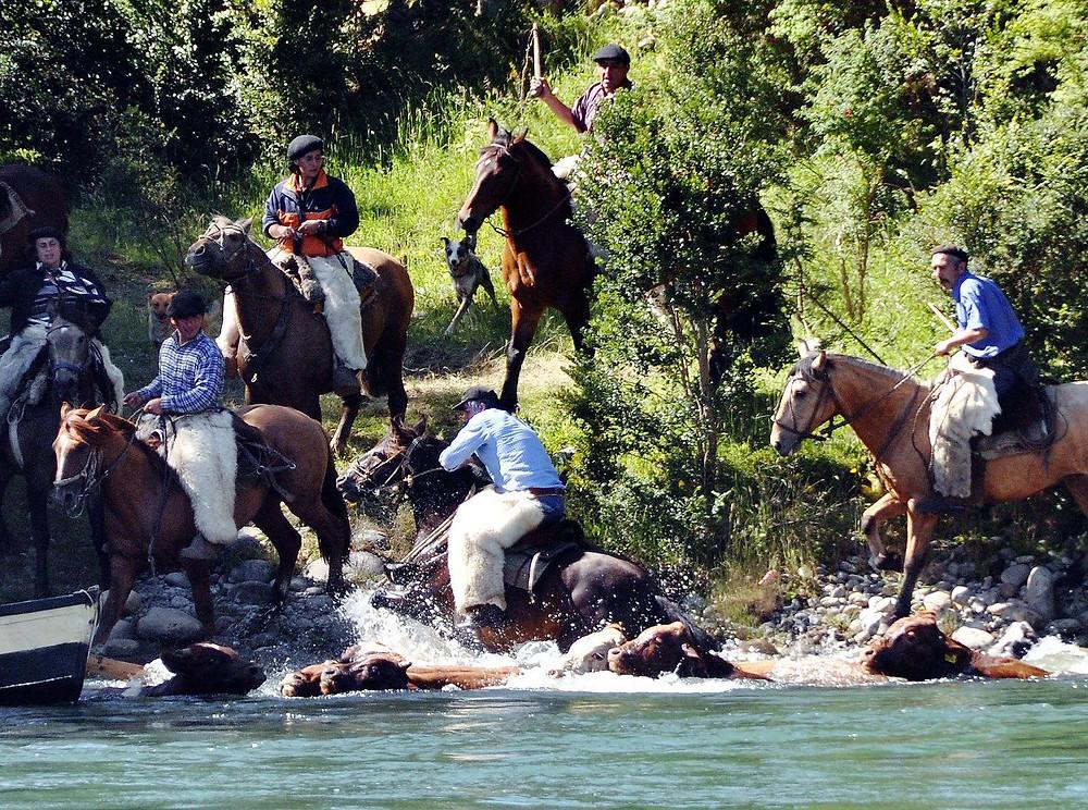 Carretera Austral Garden Route Cattle Drive Rio Rosselot Cowboys La Junta