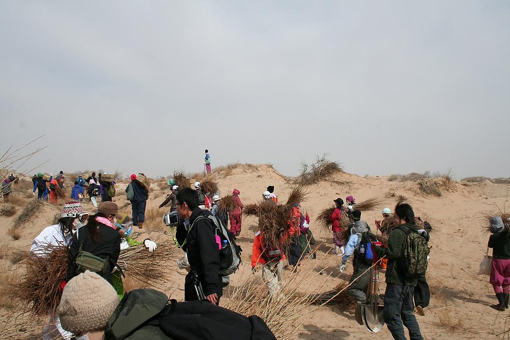 Japanese Volunteer Tree Planters in Inner Mongolia
