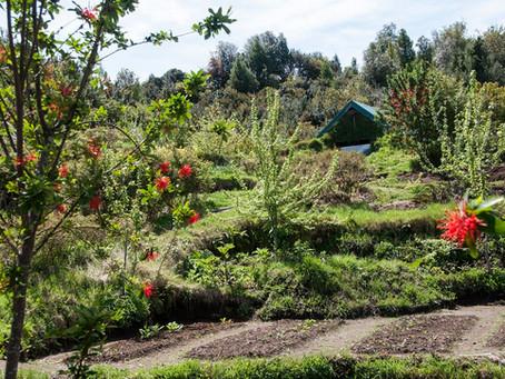 De un pasto árido a un hermoso jardín arbolado en diez años