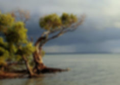 BeachmereTrees.JPG