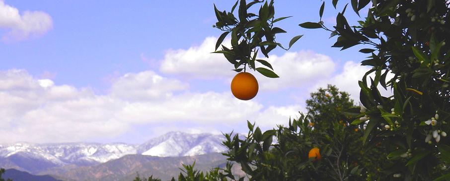 Redlands Orange.jpg