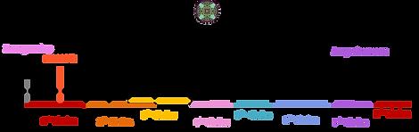 ontwikkelingsfases van de chakra's.png