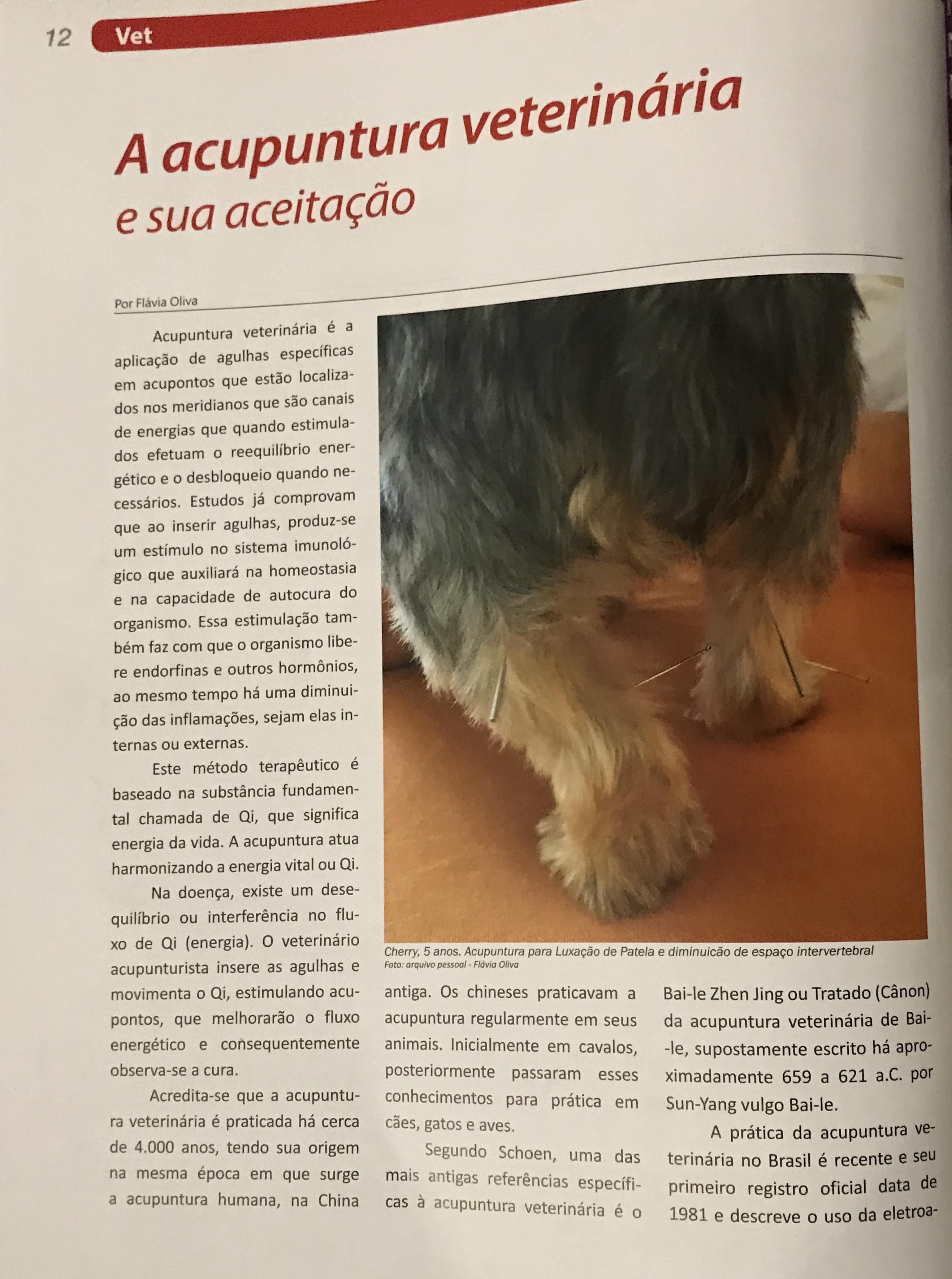 acupuntura vet