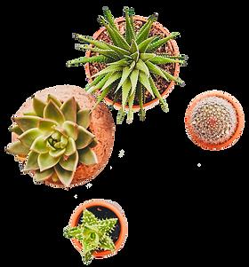 plantes-1.png