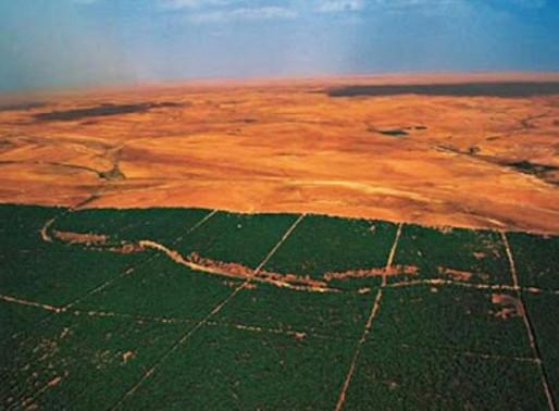 Meio Ambiente: A Grande Muralha Verde da África: 8.000 km de árvores que prometem salvar o planeta
