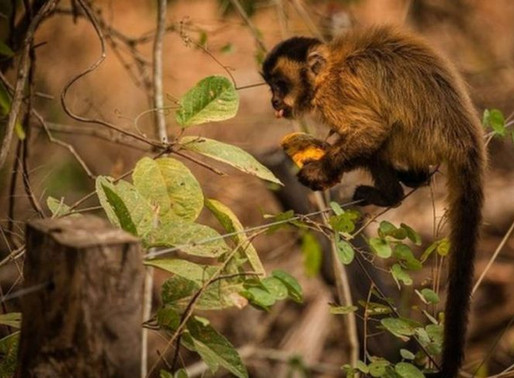 Animais atingidos por queimadas recebem água e alimentos de força-tarefa