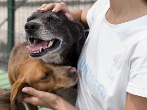 Cidade italiana aprova lei para garantir veterinário gratuito para quem adotar cães e gatos de rua