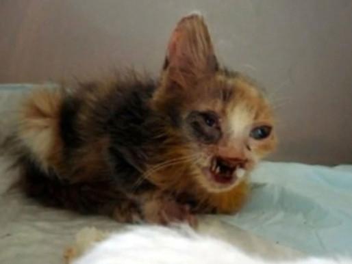 Criança resgata gatinha desfigurada de lixo na Turquia e bichinho tem vida transformada