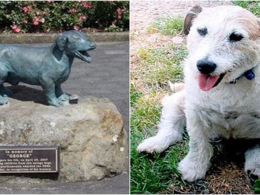 Conheça George! O cão que ganhou estátua na Nova Zelândia por salvar cinco crianças do ataque de pit