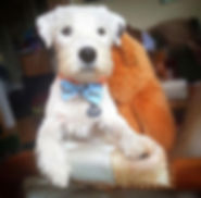 Scotty Dog.jpg
