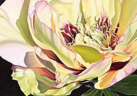 "Yellow Peony on Canvas - 48"" x 36"""