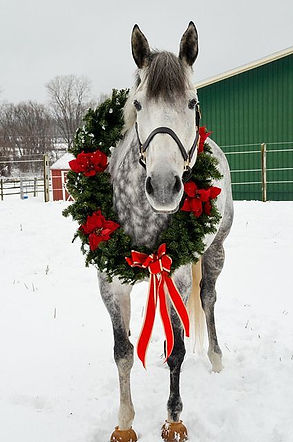 ChristmasHorse.jpg