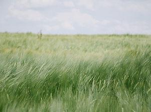 field-834375_1920.jpg